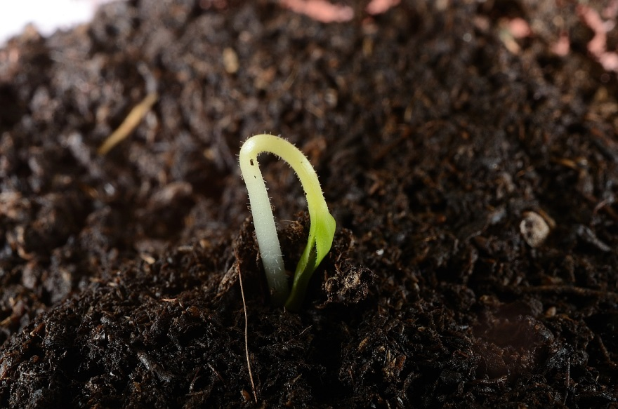 coltivareindoor