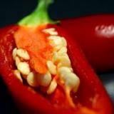 semi di peperoncino