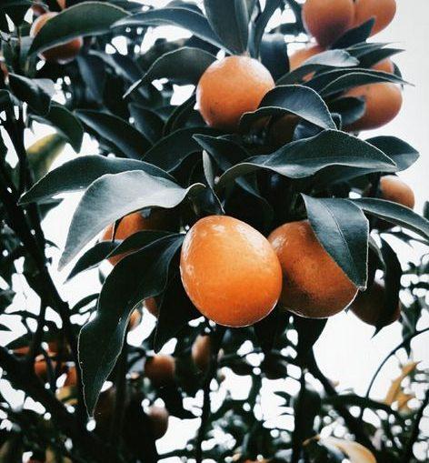 arance calabresi